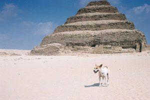 كوريا الجنوبية تنفي طلبها إستيراد الكلاب من مصر